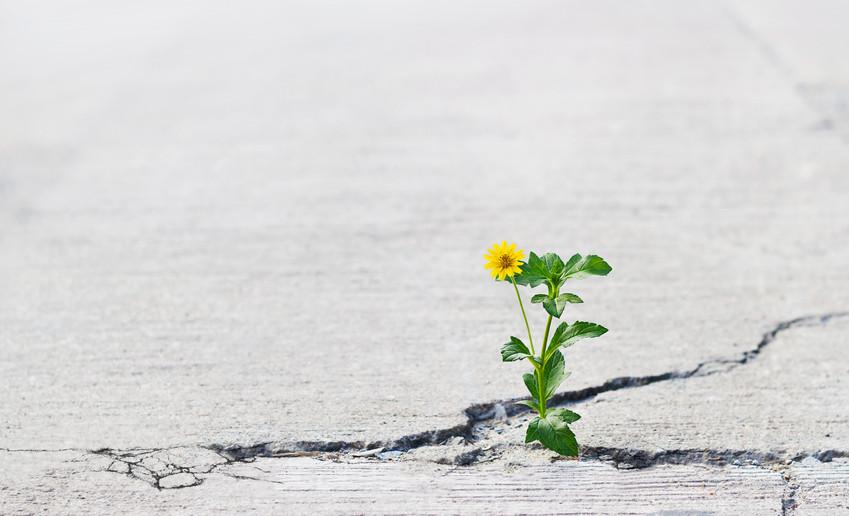 flower growing through crack in road