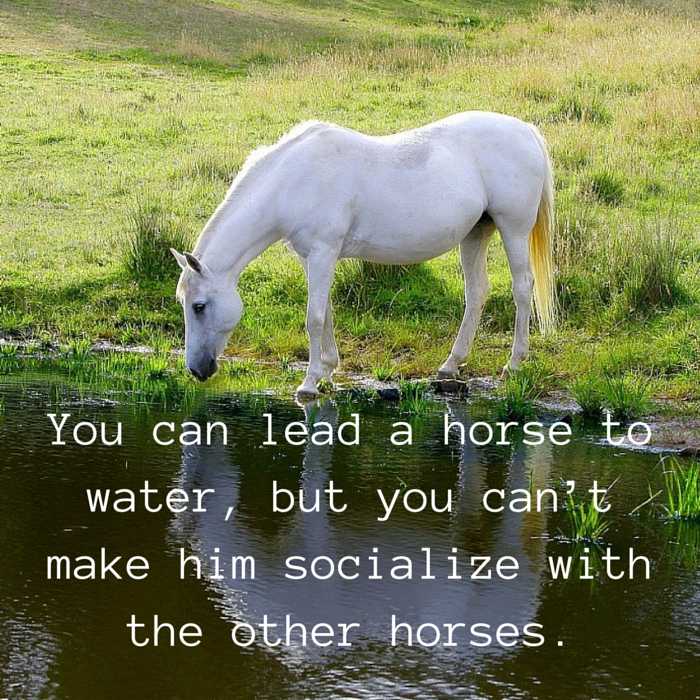 lead horse to water