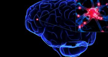 concept of serotonin in the brain