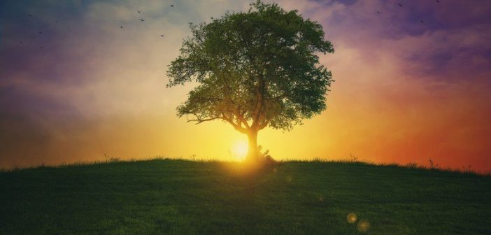 tree on hill with sunrise - concept of inspirational quotes about life