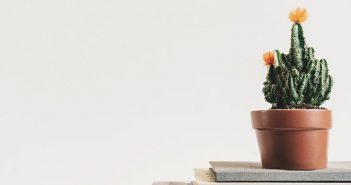 cactus plant in pot against gray background showing a minimalist lifestyle