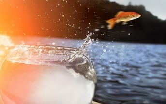 goldfish jumping out of bowl and into ocean - concept of comfort zones