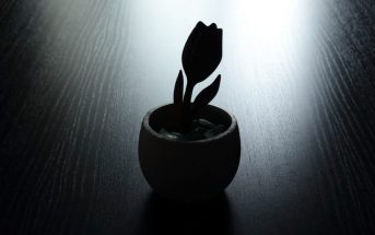 silhouette of single tulip in pot on empty table