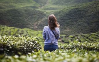 lonely young woman in green crop field