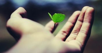 hand holding leaf illustrating life