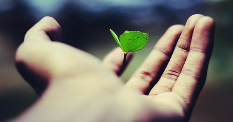hand holding leaf illustrating life