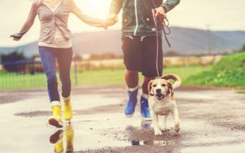 man and woman walking dog - illustrating the little pleasures in life